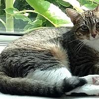 Adopt A Pet :: Pokey - South Amana, IA