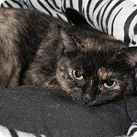 Adopt A Pet :: Alis - Ann Arbor, MI