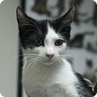Adopt A Pet :: Mike - Lancaster, PA