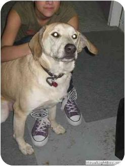 Labrador Retriever Mix Dog for adoption in Elliot Lake, Ontario - Odie