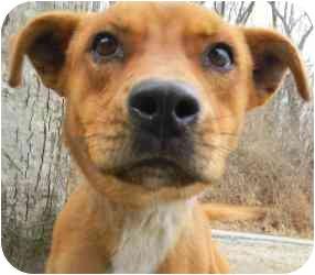 Shepherd (Unknown Type) Mix Dog for adoption in Kansas City, Missouri - Courtesy List-Frankie