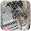Photo 1 - Akita Dog for adoption in East Amherst, New York - Bear