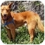 Photo 1 - Finnish Spitz Mix Dog for adoption in Vista, California - Rusty II