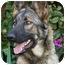 Photo 2 - German Shepherd Dog Dog for adoption in Los Angeles, California - Stella von Skye