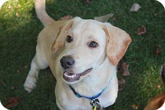 Labrador Retriever/Dachshund Mix Puppy for adoption in Marietta, Georgia - Warrior