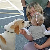 Adopt A Pet :: Winston - Chesterfield, VA