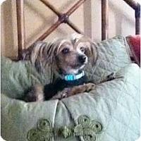 Adopt A Pet :: Princess - Ooltewah, TN
