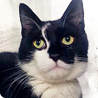 Adopt A Pet :: Storm - Brooklyn, NY