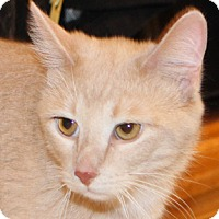 Adopt A Pet :: Pound Cake - Calgary, AB