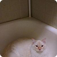 Adopt A Pet :: Samuel aka Sammy - Walla Walla, WA