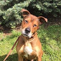 Adopt A Pet :: Wayne - Detroit, MI