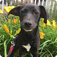 Adopt A Pet :: Cece - Marlton, NJ