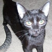 Adopt A Pet :: EMILIA - Morriston, FL