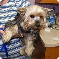 Adopt A Pet :: Reba - Conroe, TX