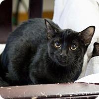 Adopt A Pet :: Cocoa - Fountain Hills, AZ
