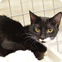 Adopt A Pet :: Misty - Youngsville, NC