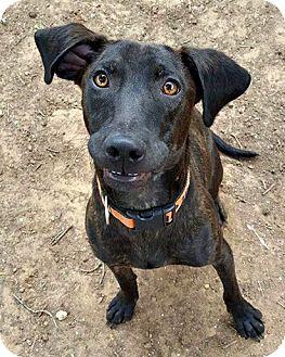 Hound (Unknown Type) Mix Dog for adoption in McKinney, Texas - Aspen