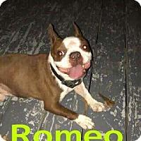 Adopt A Pet :: Romeo - Weatherford, TX
