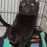Adopt A Pet :: Obie - Westville, IN
