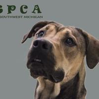 Adopt A Pet :: Lewus - Kalamazoo, MI