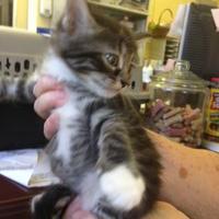 Adopt A Pet :: Bing - Crawfordville, FL