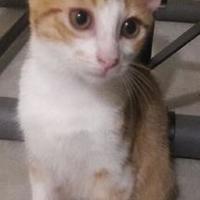 Adopt A Pet :: Eliot - Santa Fe, TX