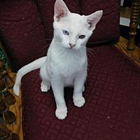 Adopt A Pet :: Finley - Davis, CA
