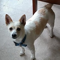 Adopt A Pet :: Bailey - West Allis, WI