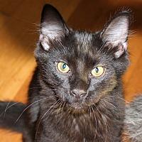 Adopt A Pet :: Justice - Huntsville, AL