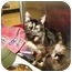 Photo 2 - Domestic Longhair Cat for adoption in Houston, Texas - Madonna