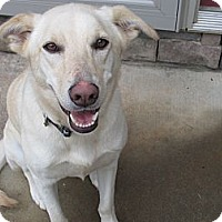Adopt A Pet :: Daisy - Conyers, GA