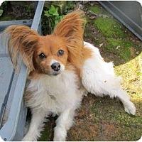 Adopt A Pet :: MISTY - San Diego County, CA