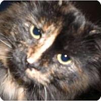 Adopt A Pet :: Sophie - Rigaud, QC