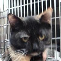 Adopt A Pet :: Toffee - St. Petersburg, FL