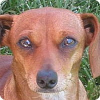Adopt A Pet :: Greta - Oakley, CA