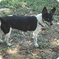 Adopt A Pet :: Pappy - San Antonio, TX