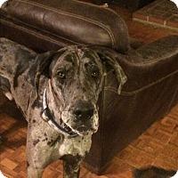 Adopt A Pet :: Diesel - Reno, NV