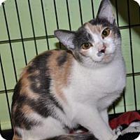 Adopt A Pet :: Miss Millie - Northbrook, IL
