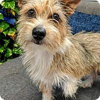 Adopt A Pet :: Dexter - NO LONGER ACCEPTING APPLICATIONS! - Arlington, VA