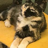 Adopt A Pet :: Kits - Auburn, CA
