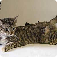 Adopt A Pet :: KIWI - Sandusky, OH
