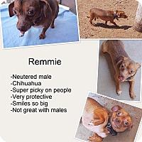 Adopt A Pet :: Remmie - Phoenix, AZ