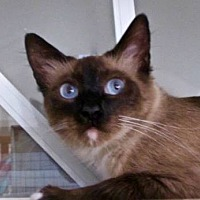 Adopt A Pet :: Aurelia - Davis, CA