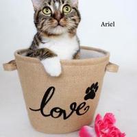 Adopt A Pet :: Ariel - Luling, LA