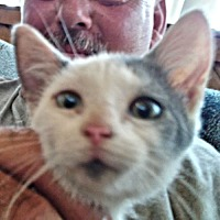 Adopt A Pet :: Gray Tail - Norristown, PA