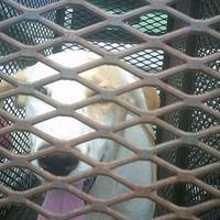 Adopt A Pet :: Tate - Opelousas, LA