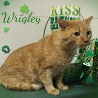Adopt A Pet :: Wrigley - Anderson, IN