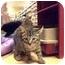 Photo 2 - Domestic Shorthair Kitten for adoption in fountain Inn, South Carolina - no names