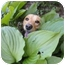 Photo 3 - Golden Retriever Mix Dog for adoption in Spruce Pine, North Carolina - Gabe