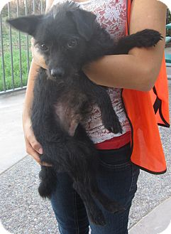 Terrier (Unknown Type, Medium) Mix Dog for adoption in Westminster, California - Punk